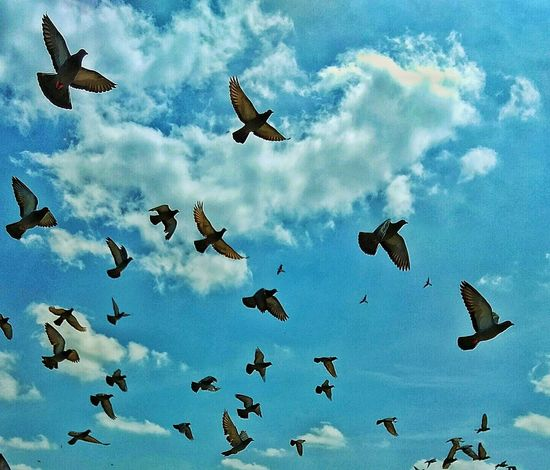 Flying High Flying Bird Cloud - Sky Sky Low Angle View Flock Of Birds Beauty In Nature Spread Wings Nature Mid-air Flying Birds Pigeon Flock Of Birds Pigeons Everywhere Jaipur Open Sky Sky Is The Limit Freedom Freedom Of Life Pigeons In Flight Pigeons Flying
