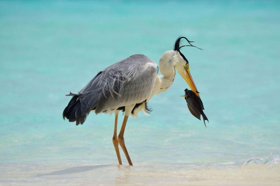 Beautiful stock photos of vogel, Animal Themes, Animal Wildlife, Animals Hunting, Animals In The Wild