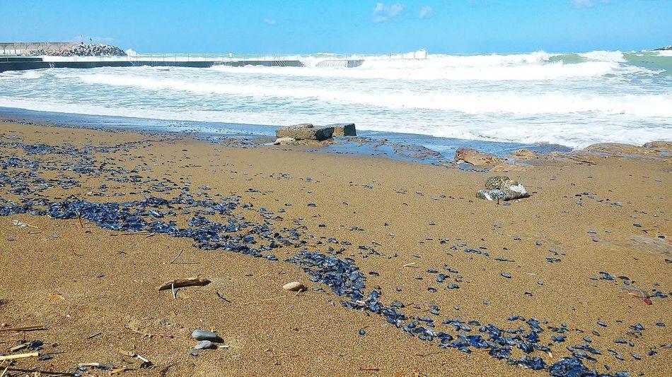 Velella Dopo Mareggiata Mare Sea Seashells Blue Sky Waves Sunshine Walkpath Windy Day Blu Onde Vento Nature Sand Sabbia Rosignano Solvay Boats In The Distance Barcheavela