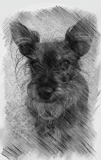 Digitty Dog Pets Mydog♡ Blackandwhite Photography Doglover Mypetsrule