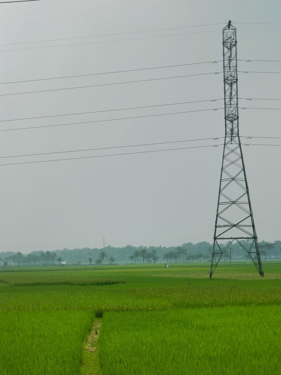 It's A Beautiful Day Low Light Photography Rice Field Greenery Pastel Power Negative Space Pastel Colors Softness Shades Of Green  Electricity Pylon Landscapes Landscape_Collection Here Belongs To Me Leading Lines Nature Electric Wire Landscapes With WhiteWall Taking Photos EyeEm Best Shots EyeEm Gallery EyeEm Nature Lover Learn & Shoot: Balancing Elements Hello World The Rise Of Nature In Jessore