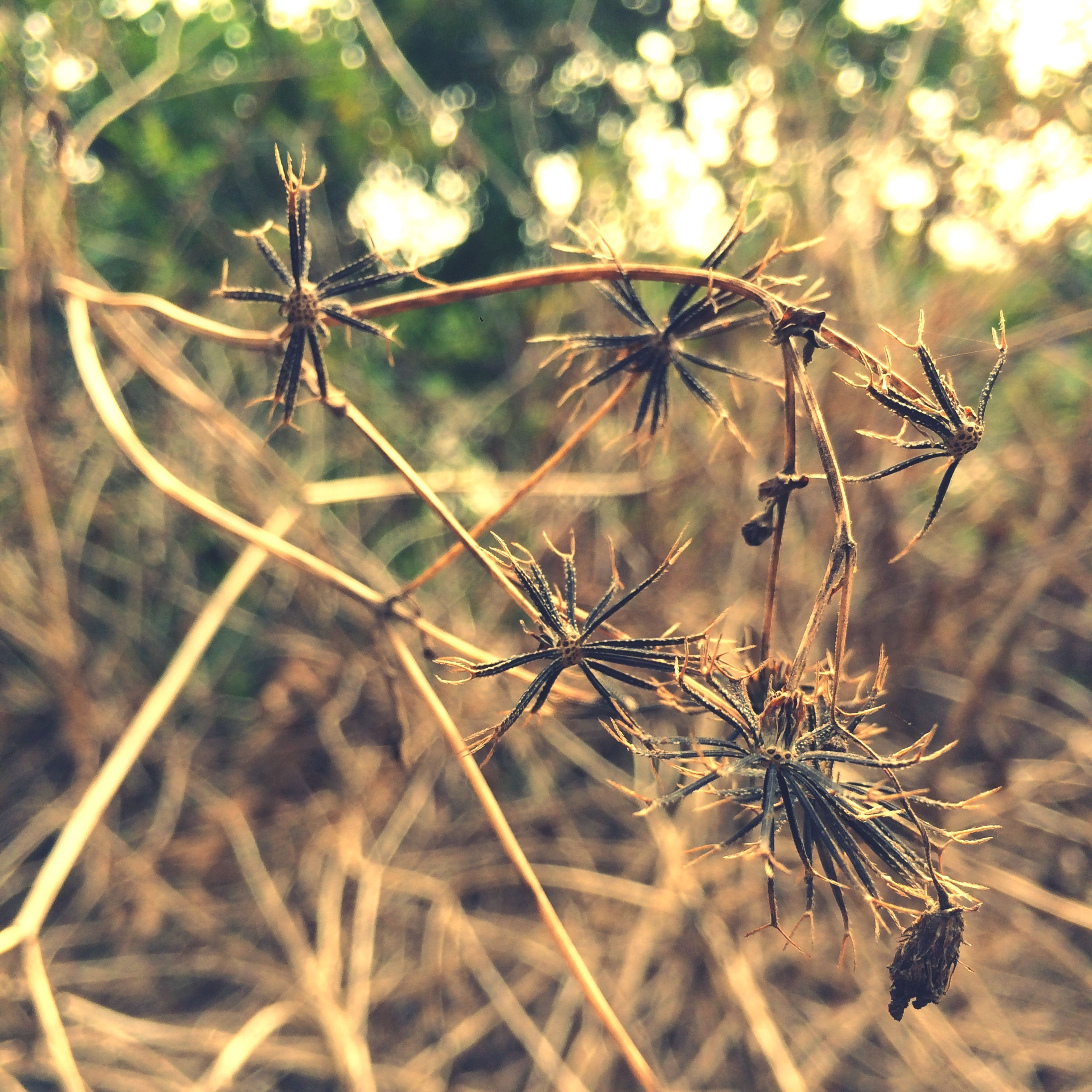 plant, nature, close-up, outdoors, no people, growth, day, branch, beauty in nature, fragility, desaturated