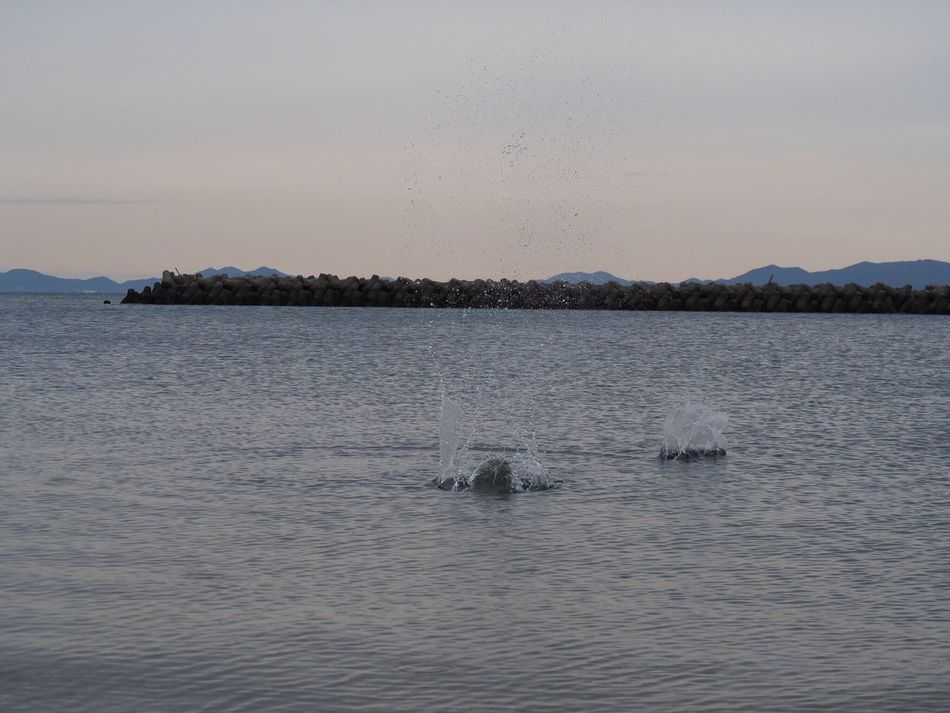 水切り 日間賀島 海 Sea Japan Aichi Ducksanddrakes