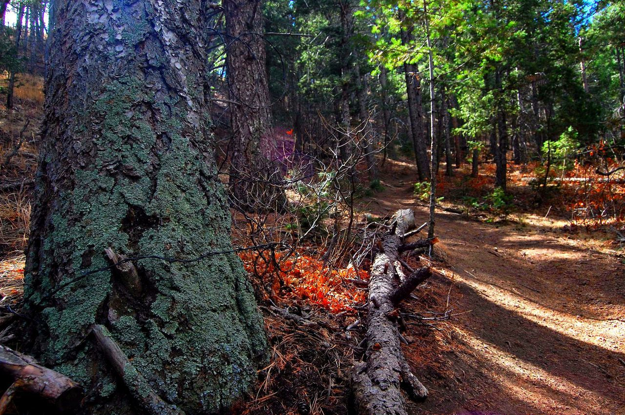 Tree No People Outdoors Growth Nature Beauty In Nature Day Colorado Photography Hiking Hike Scenic HikeLife Optoutside Scenics Outdoor Photography ExploreEverything Wanderlust Close-up Tree Trunk Greettheoutdoors TheGreatOutdoors Textured  Focus On Foreground Viewcolorado A Game Of Tones