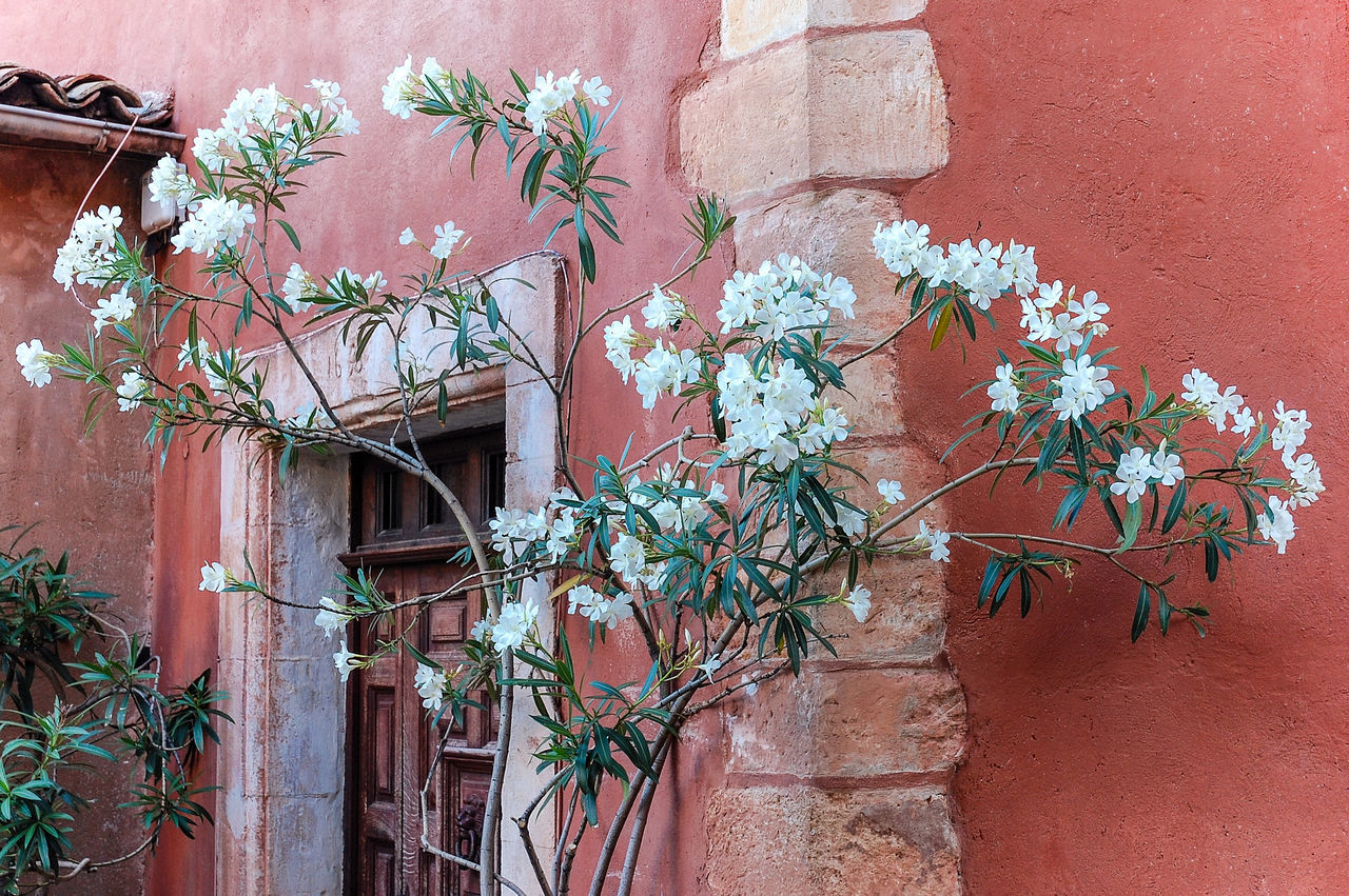 Beautiful stock photos of france, Architecture, Beauty In Nature, Blooming, Building Exterior