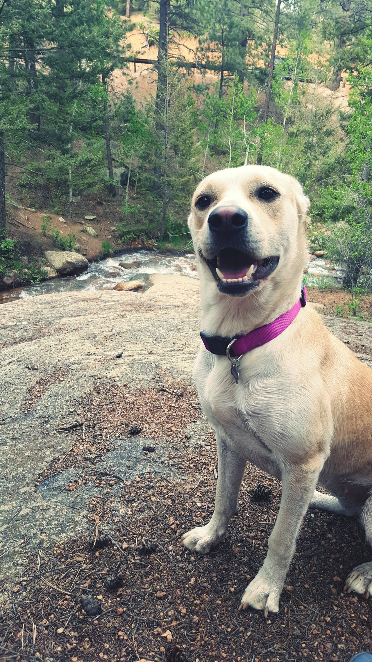 Eyemdog AdventuresWithDazey Colorado Happydog
