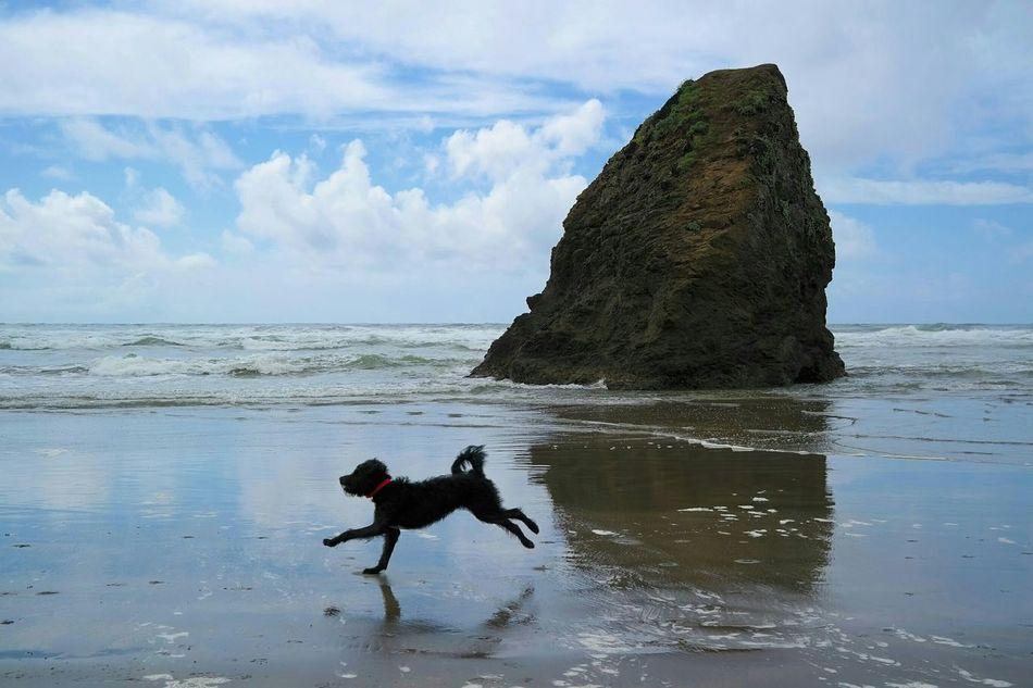 /F R E E D O M/ Summer Dogs Labradoodle Fortbragg California Beach
