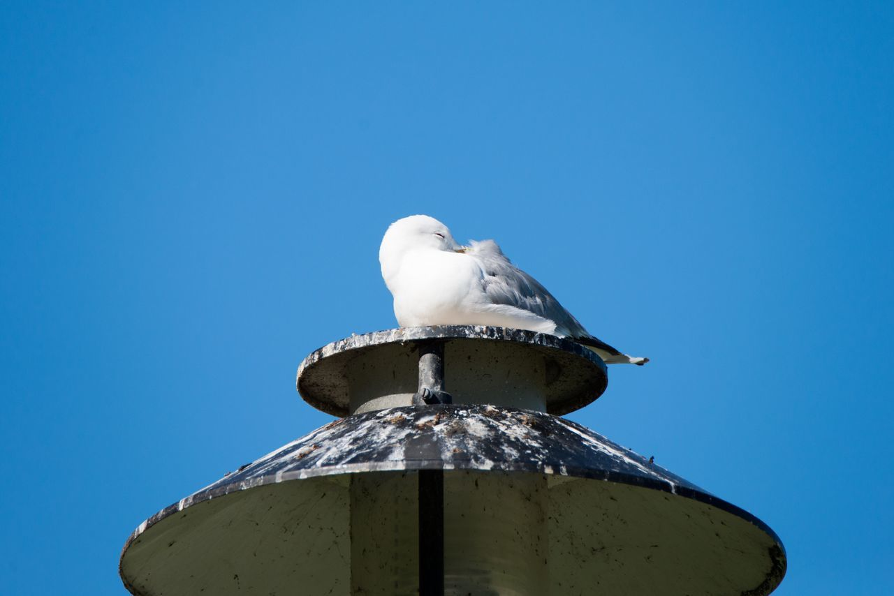 Resting gull. Seagull Bird Summer Bird Photography Nikon Nikonphotography Nikond600 Tamron150600mm Gotland Sweden Visby