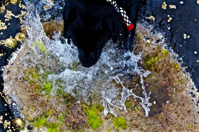 Animal Head  Animal Themes Black Black Color Capture Close-up Day Dog Domestic Animals Fast Mammal Nature No People Outdoors Pets Rock - Object Shutter Speed Water