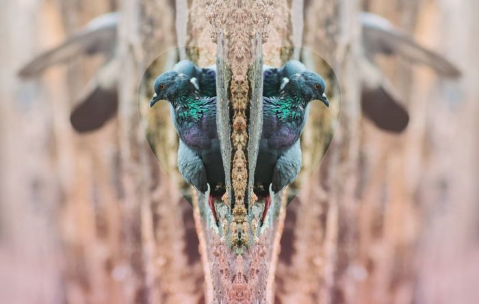 EyeEm Selects Animal Bird Beauty In Nature Outdoors Love India North India Delhi