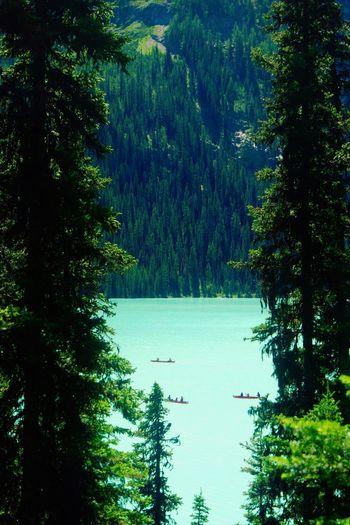 Boats on Lake Louise Boats Boat Lake Glacier Glacial Water Trees Tree Louise Like Follow