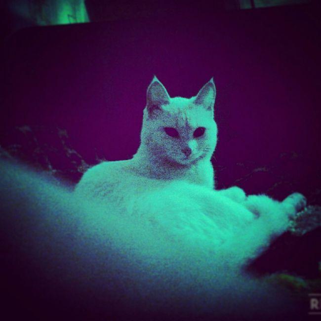Cat My Little Cat☺