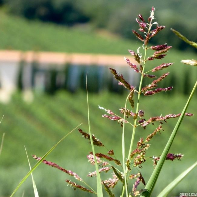 Sweet Summer Breeze Farm Organicfarm Countryside Italiancountryside maremma Italy Tuscany nature beautifullandscape