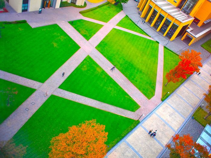 Aoyama Gakuin Art Autumn Autumn Leaves Campus No People Road Road Marking Street University