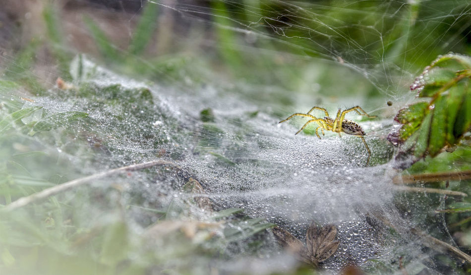 Art of Spider Animal Themes Animal Wildlife Animals In The Wild Art Is Everywhere Close-up Day Fragility Insect Nature No People One Animal Outdoors Selective Focus Spider Spider Spider Web Survival Web
