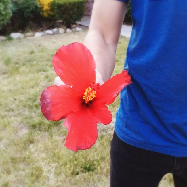 At a friends house, he found me an island flower Lovely Sunset Alwayshandedflowers Cute Love Red Red Flower