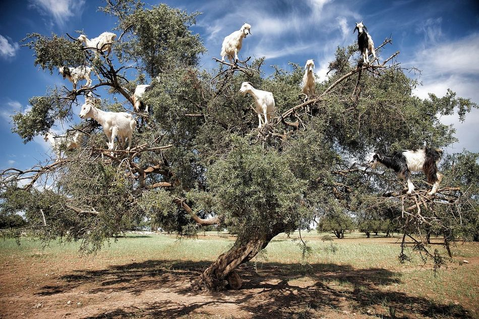 Nature On Your Doorstep Nature Marocco Love Animals Tree Trees Landscape Traveling Travel