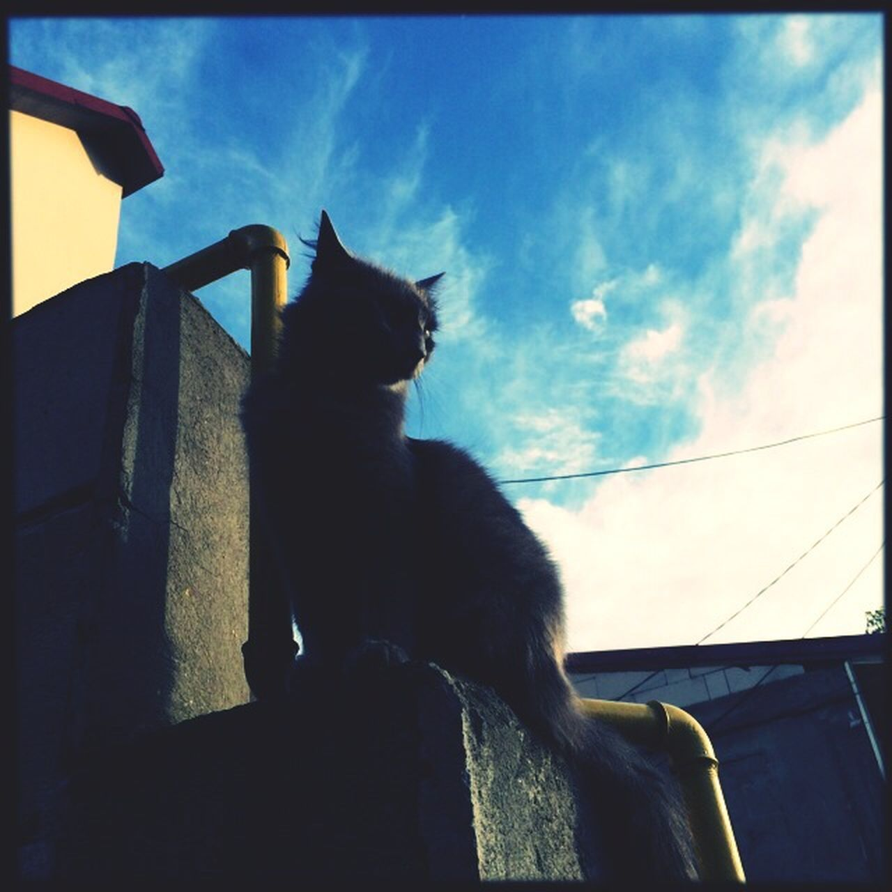 domestic cat, pets, one animal, animal themes, domestic animals, sky, feline, cat, mammal, sitting, low angle view, no people, day, outdoors, nature