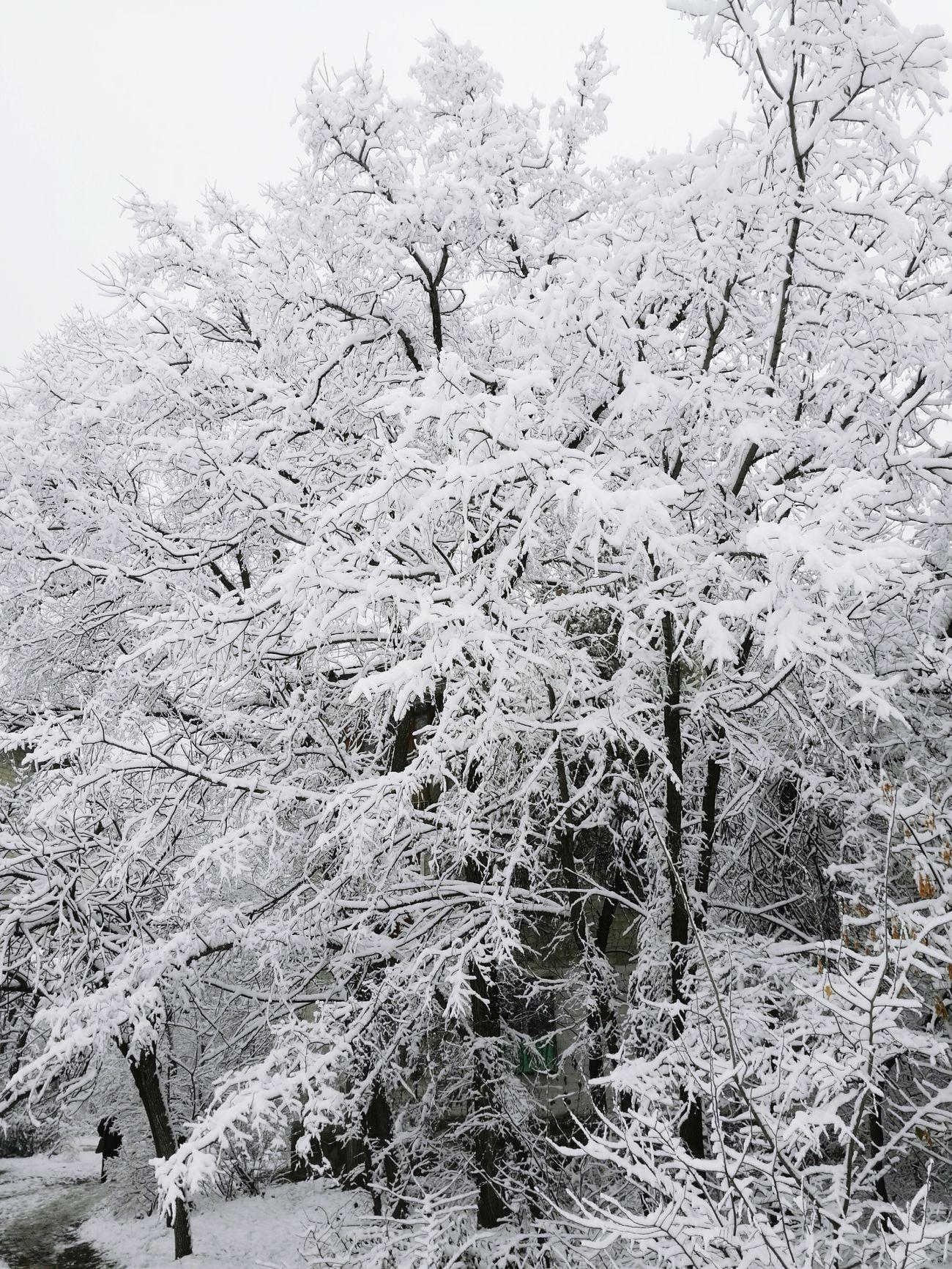 Winter Wonderland ❄ pt II