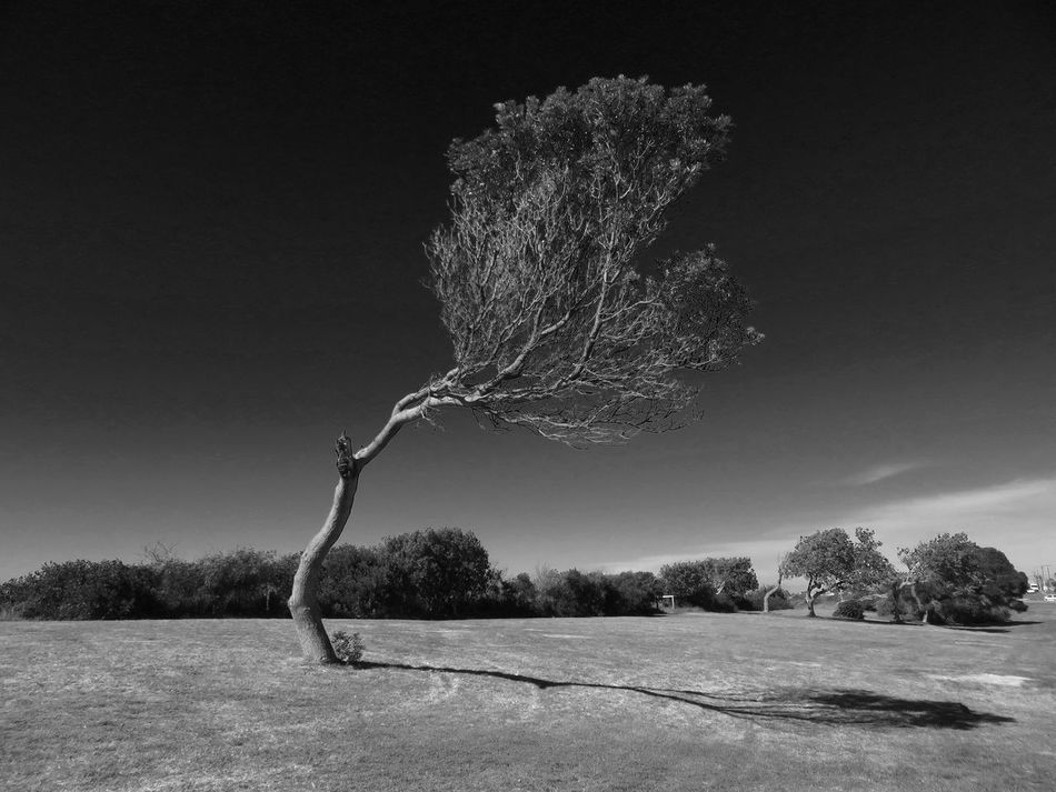 Bent Tree Landscape Isolated Tranquil Scene Tranquility Nature Lone Outdoors Beauty In Nature Day Sky No People Scenics Bare Tree Branch Clear Sky Life Is A Beach Beach Photography EyeEm Black&white!