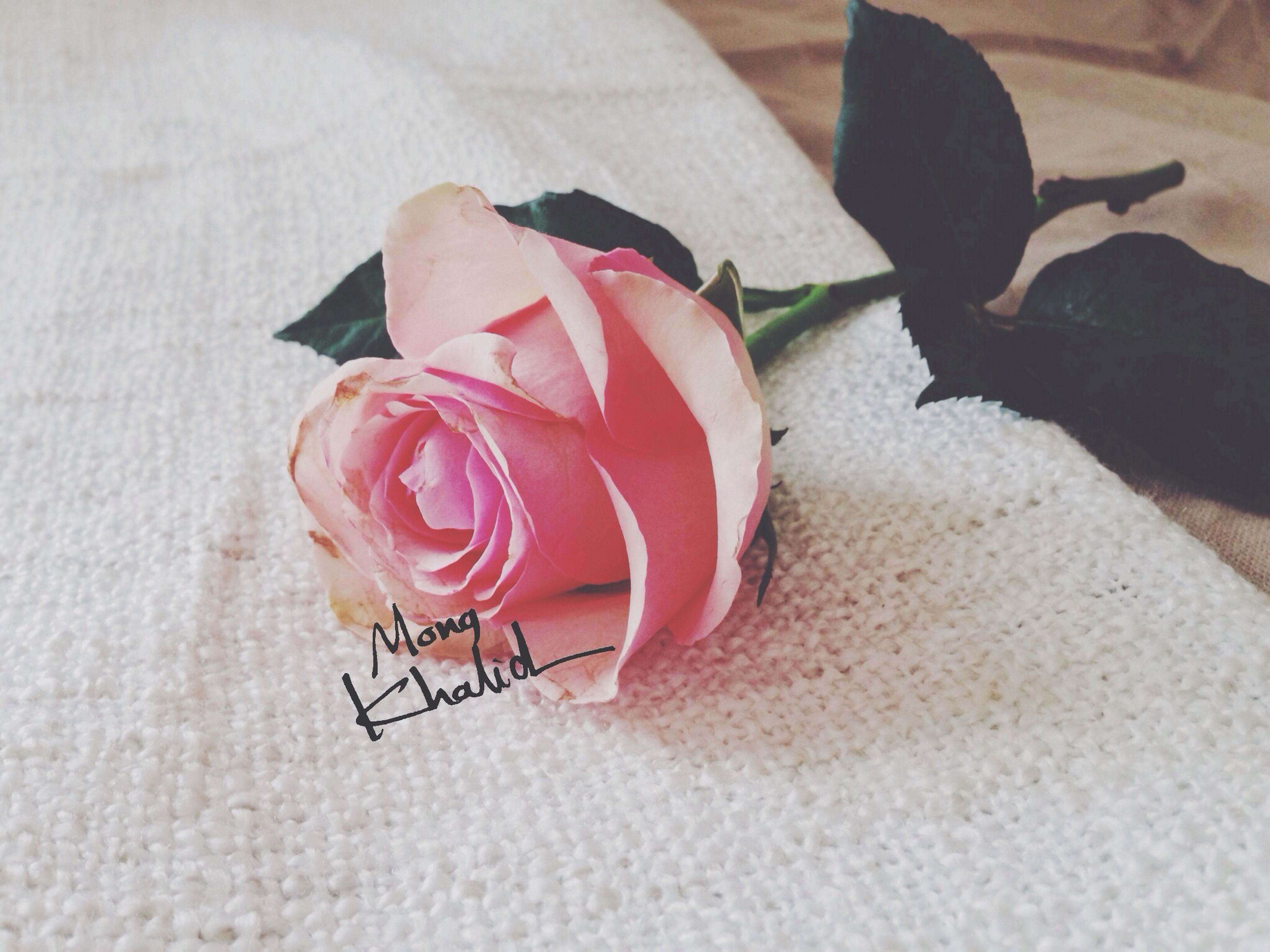 indoors, flower, table, still life, red, rose - flower, close-up, petal, high angle view, fragility, pink color, wall - building feature, freshness, no people, single object, shadow, day, sunlight, vase, rose
