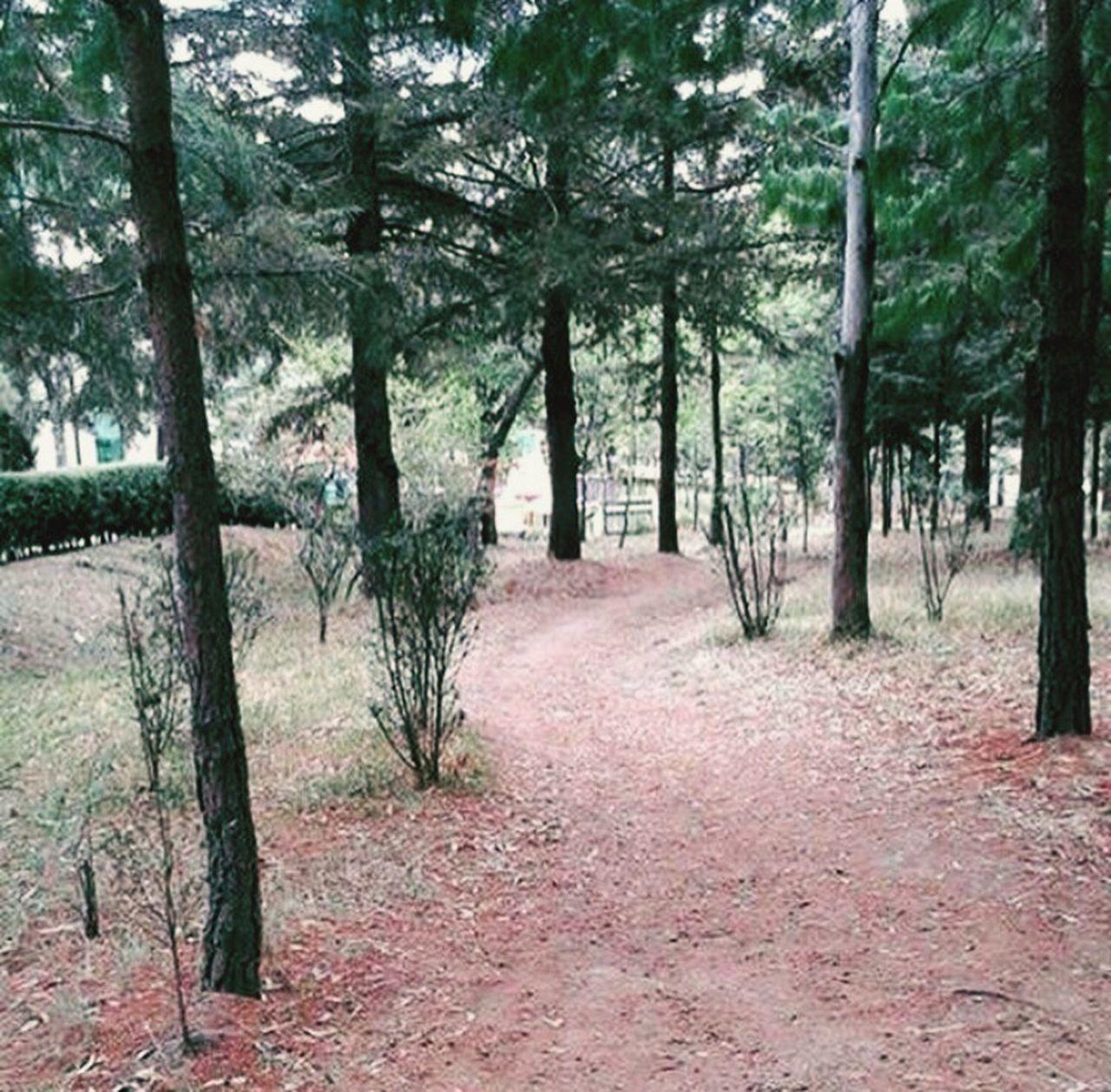 Sé que el camino será largo, pero a tu lado podrá hacerse corto 💘v💘 Amor Visitmexico Arboles Paz Camino Naturaleza Bosque Maravillas De La Naruraleza Sentimientos