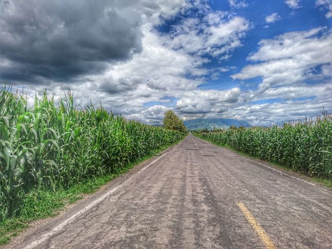 Cloud - Sky Nature Agriculture Rural Scene Road Field Sky Day Beauty In Nature Landscape Scenics Outdoors No People Storm Cloud Tree Grass The Way Forward Cob Corn Higway Vanishing Point The Week On EyeEm EyeEmNewHere Perspectives On Nature
