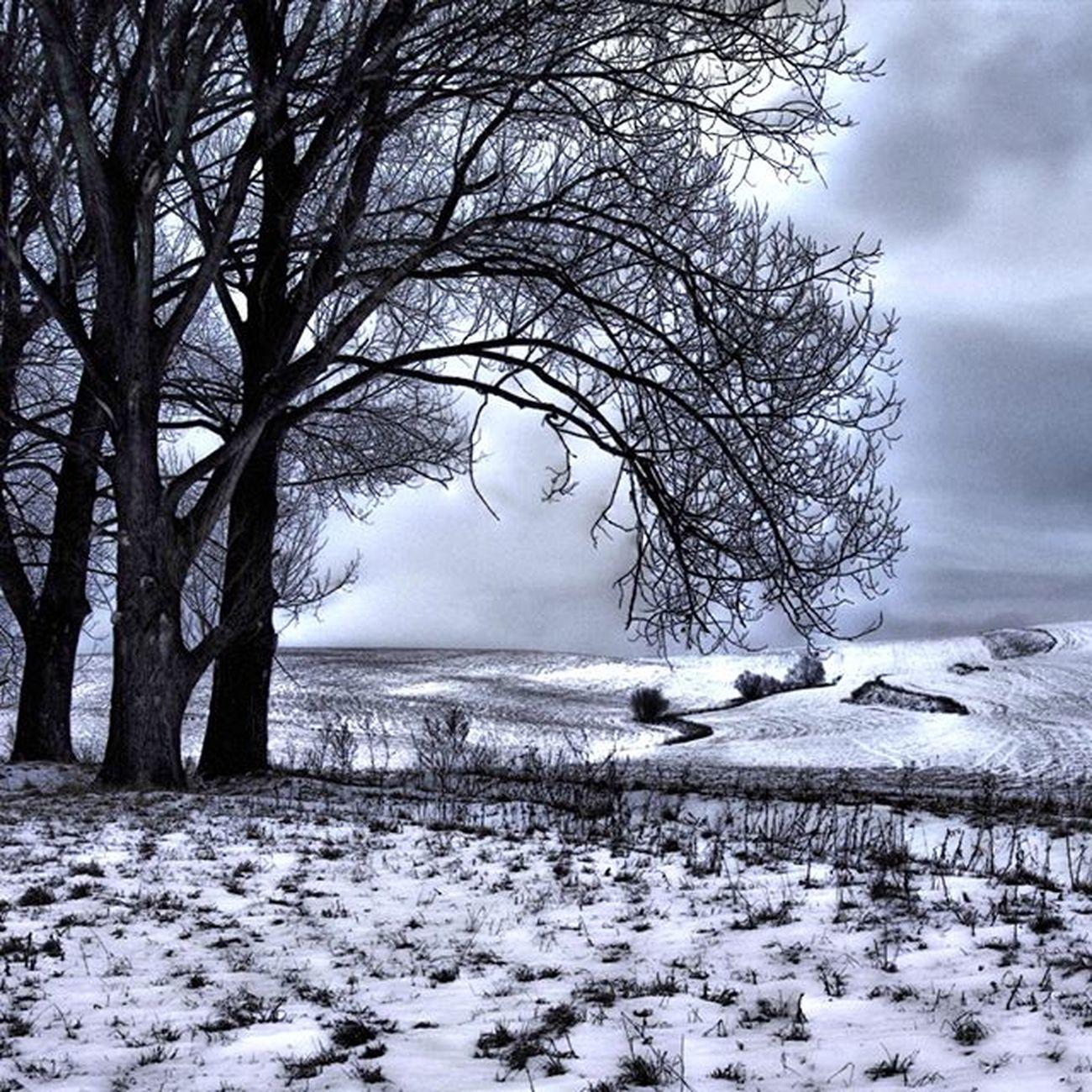 Winter Slovakia Landscape_lovers Landscape_captures Thisisslovakia Pureslovakia Outdoor Sky Winter Slovakia Tree Snow