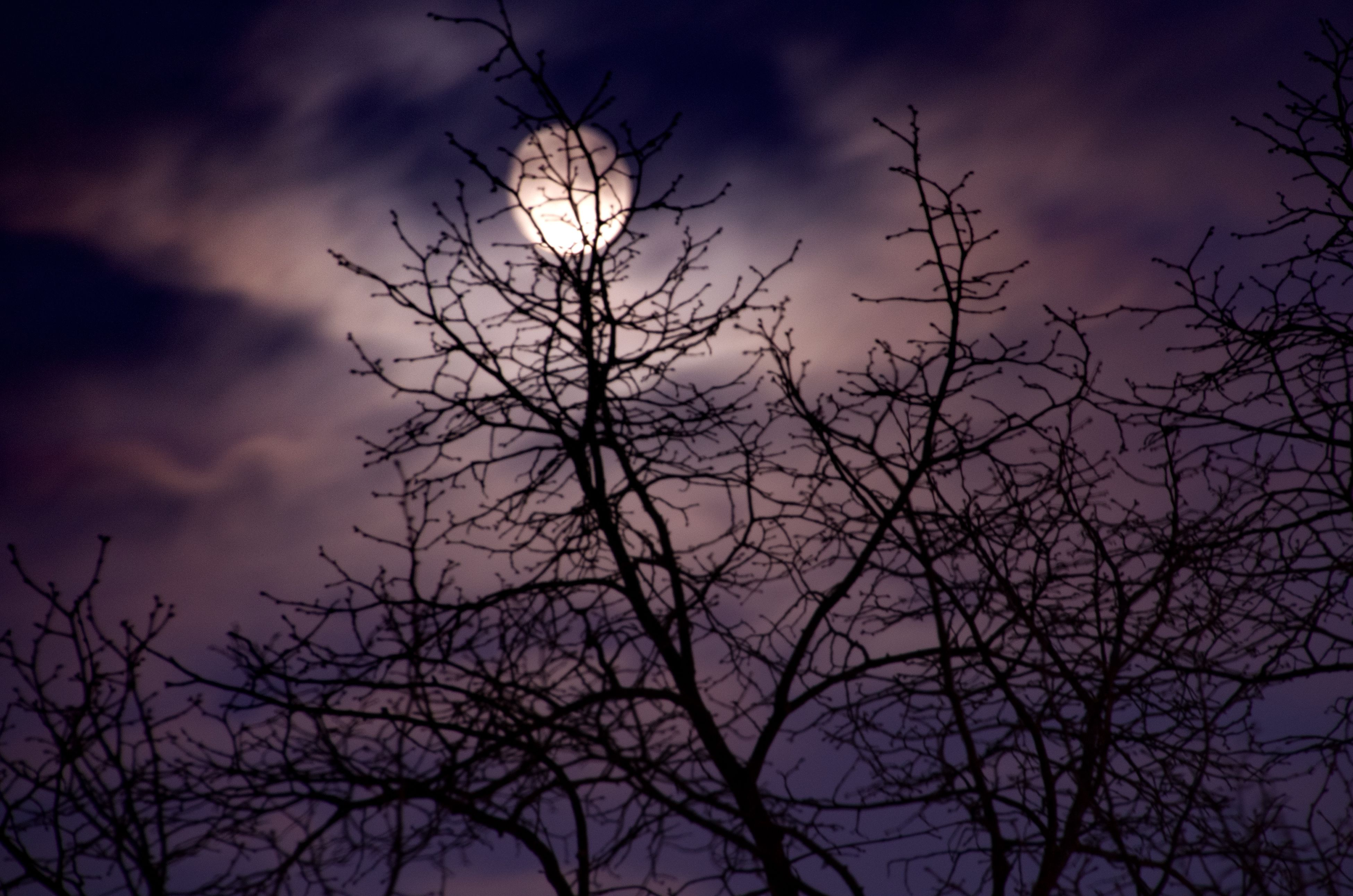 bare tree, branch, low angle view, tree, silhouette, sky, tranquility, nature, beauty in nature, cloud - sky, scenics, dusk, tranquil scene, outdoors, no people, dead plant, dried plant, sunset, cloudy, growth
