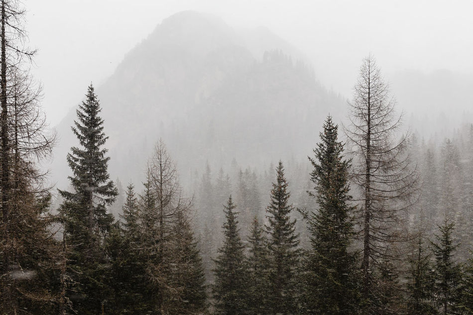 Beauty In Nature Cold Temperature Day Fog Forest Mountain Nature No People Outdoors Pine Tree Sky Snow Snow Covered Snow Day Snow ❄ Snowcapped Mountain Snowing Snowing Day Snowing ❄ Snowy Tree Tree Trees Winter