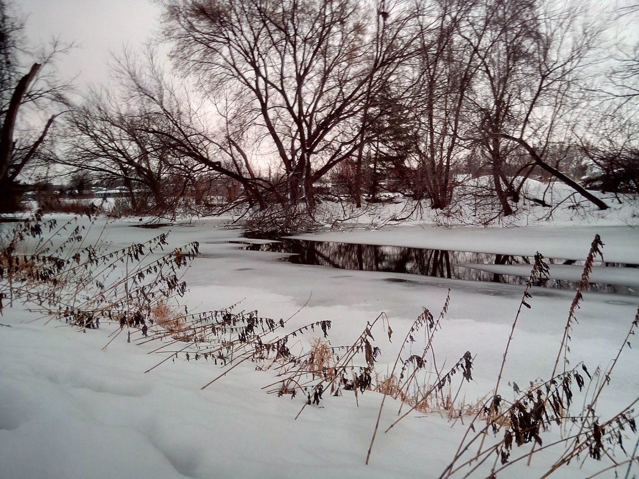 Relaxation Snow Winter Scene Stream Tranquility Scenic Peaceful Gray Skies Trees Water The Driftless Region Calmitude