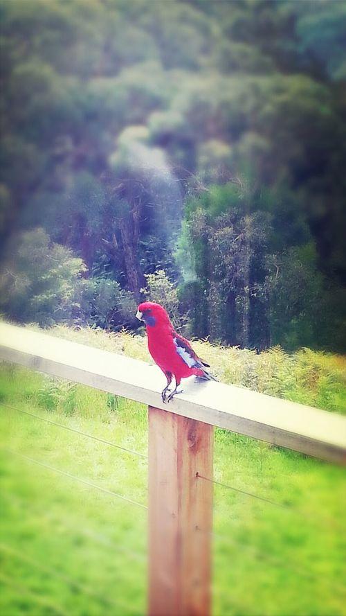 Unexpected Visitor Bird Enjoying Nature Oh Hello