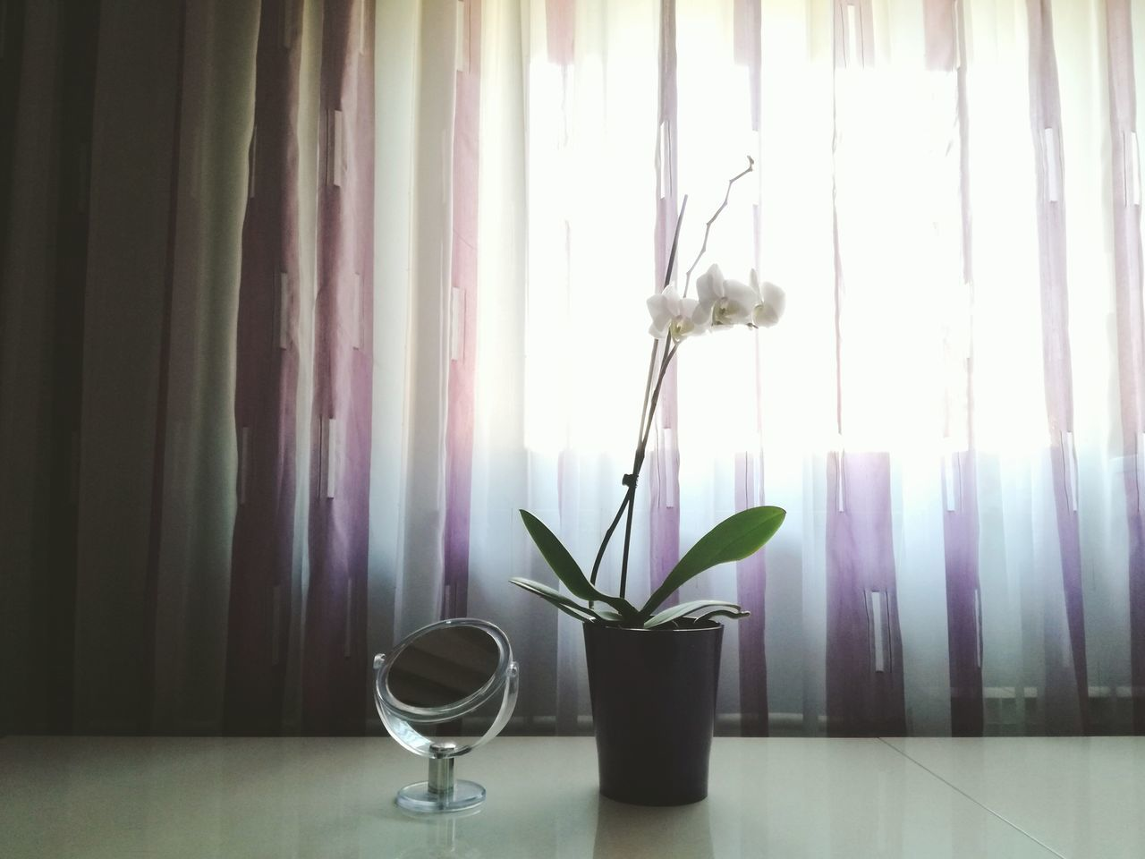 Plant Indoors  Nature Growth Flower Leaf No People Day Indoors  Blossom Low Angle View Multi Colored Outdoor Photography Mirror Picture White Background Orchid Mirror Flower Head Freshness Beauty In Nature Outdoors Sunlight Book Watercolor Painting