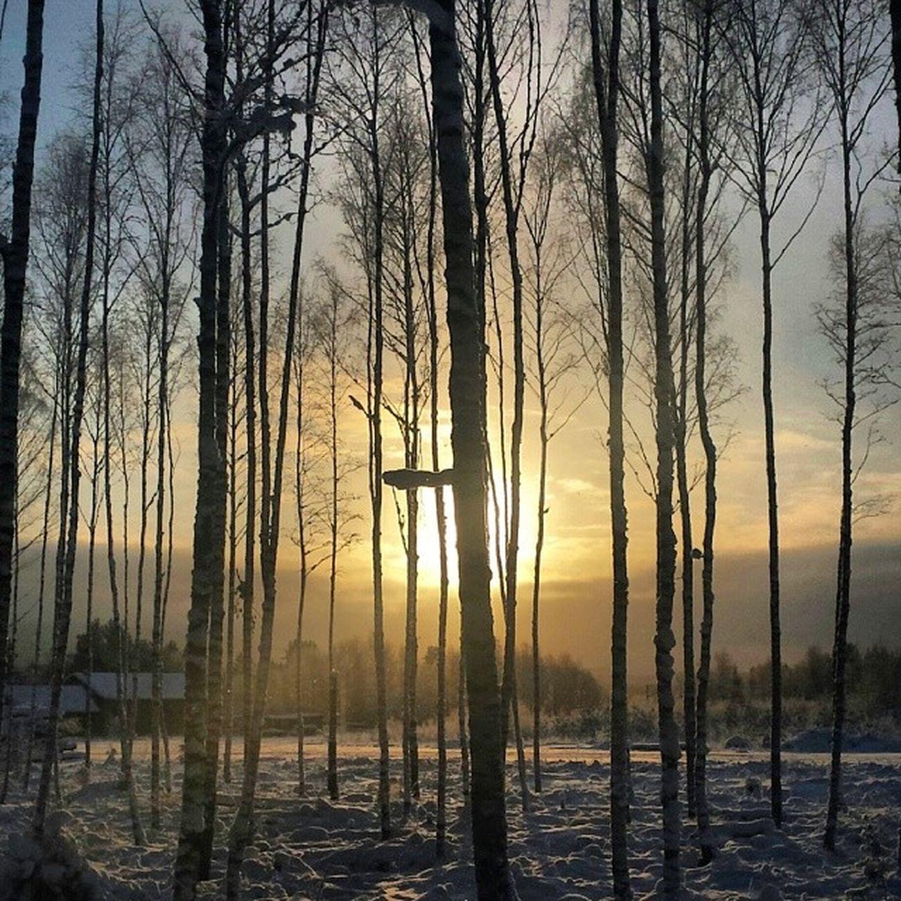 Dalarna Instadalarna Dalsberget Vinter Träd Hjortnäs