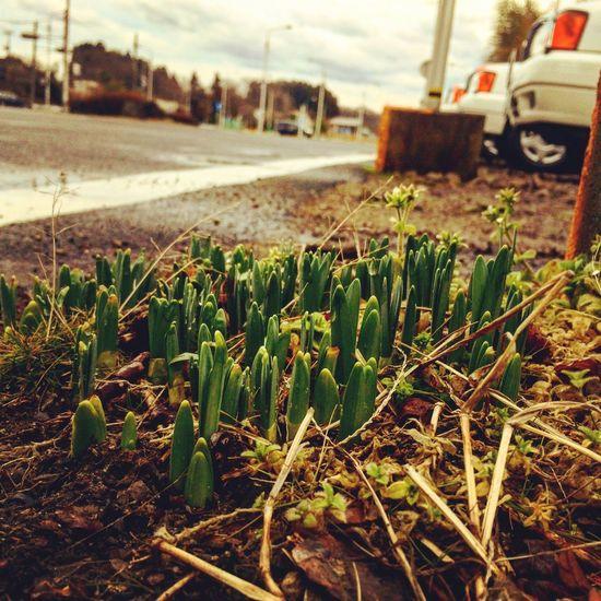 春は近いぞ✨