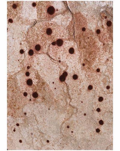 """Found Art"" Aztec Sandstone with ferrous nodules Minimalobsession Minimalism EyeEm Best Shots Malephotographerofthemonth This Week On Eyeem No People Day Brown Close-up Textured  Outdoors Nature"