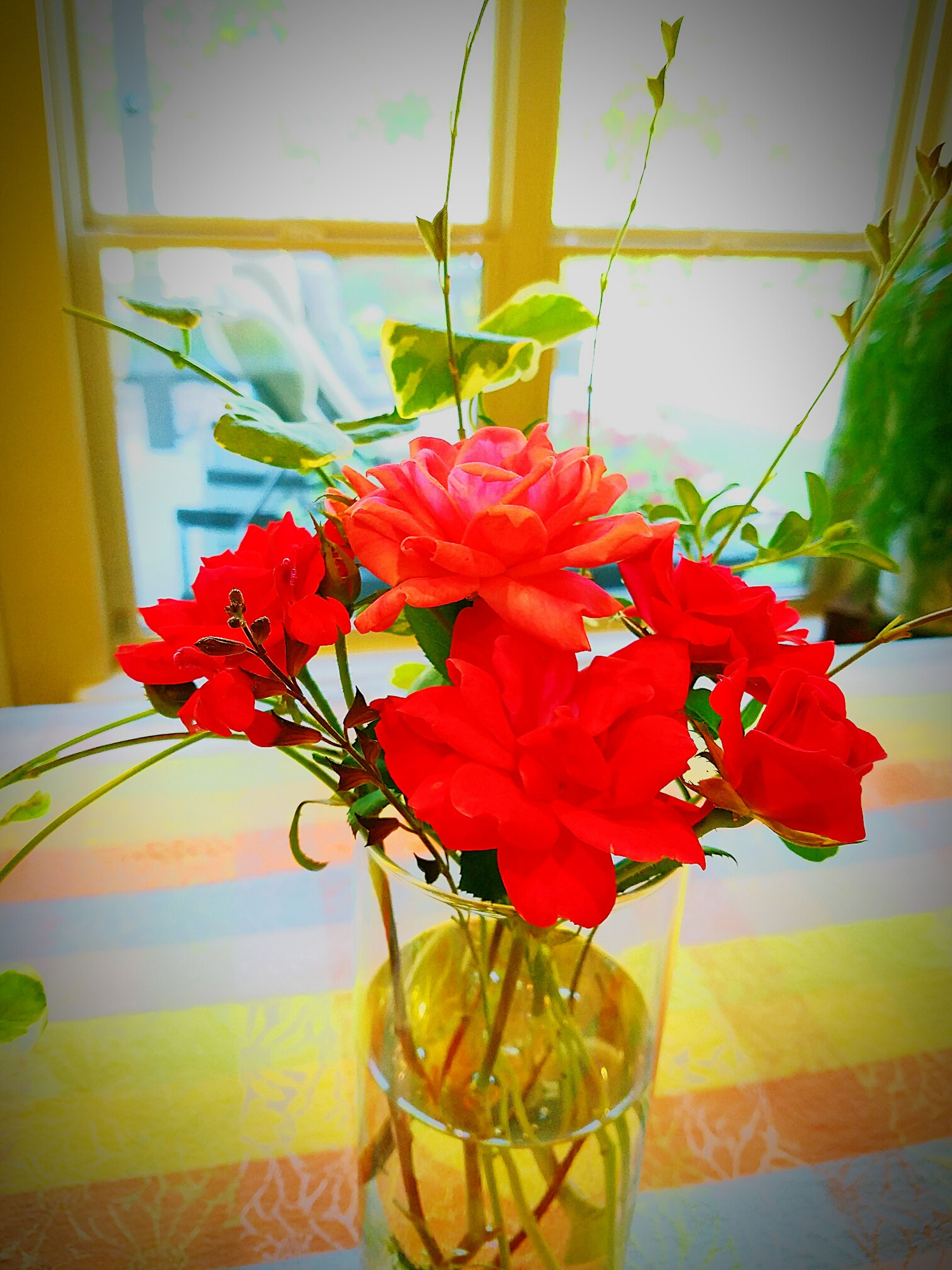 flower, indoors, freshness, fragility, vase, petal, glass - material, red, table, plant, growth, flower head, potted plant, close-up, leaf, beauty in nature, home interior, decoration, nature, transparent