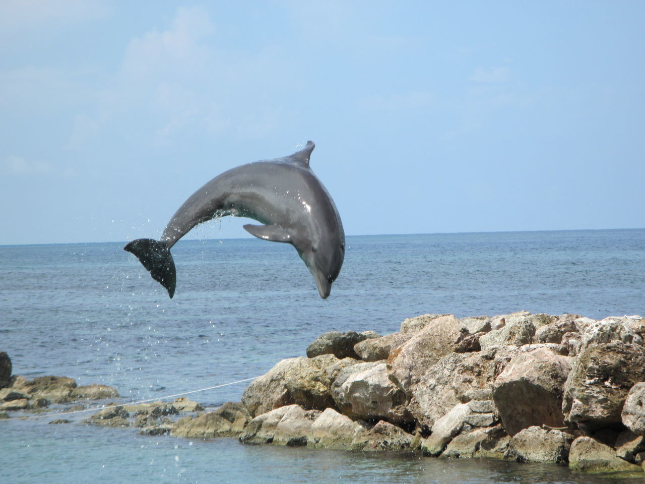 Animal Wildlife Animals In The Wild Dolphin Nature No People One Animal Sea Sea Life Water jumping Dolphin EyeEm Selects