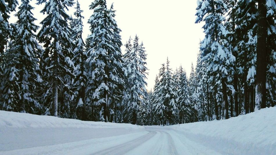 The road to Crater Lake National Park Crater Lake, Oregon Crater Lake Winter Forest Snow Snowy Road Snow ❄ Pine Woodland Landscape Outdoors Nature