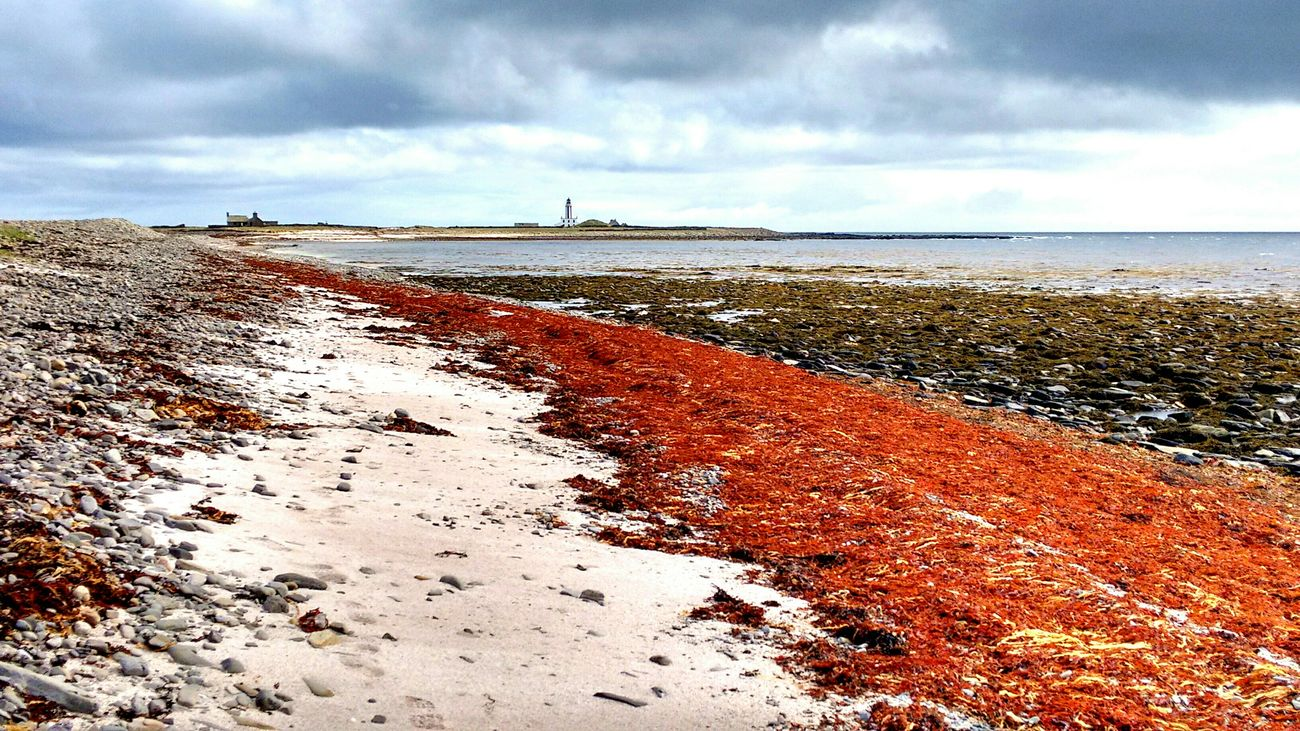 Nature's Red carpet to lighthouse. Red Carpet Lighthouse Orkneyislands
