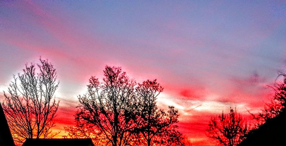 Sunrise in Germany...what colors?! So amazing ... Sunset Red Tree Nature Sky Beauty In Nature Silhouette No People Outdoors Landscape Day Romantic Sky Nostalgic Scene Originalpicture GetbetterwithAlex Dramatic Sky Beauty In Nature Tranquility
