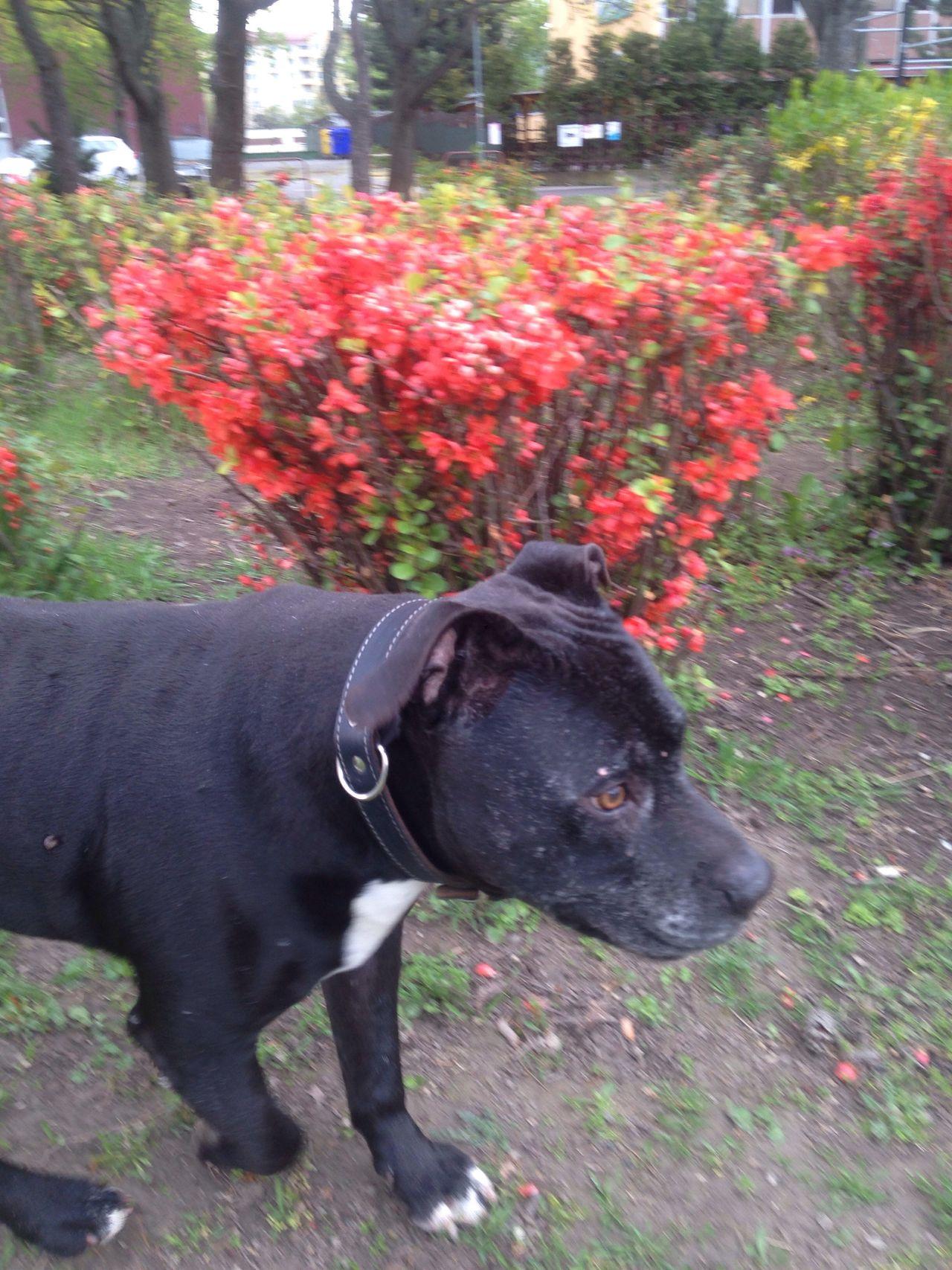 ...somebody is watching... always... Dogslife Dog❤ Dogs Of EyeEm Dog On Duty Dog Walking Dog Love