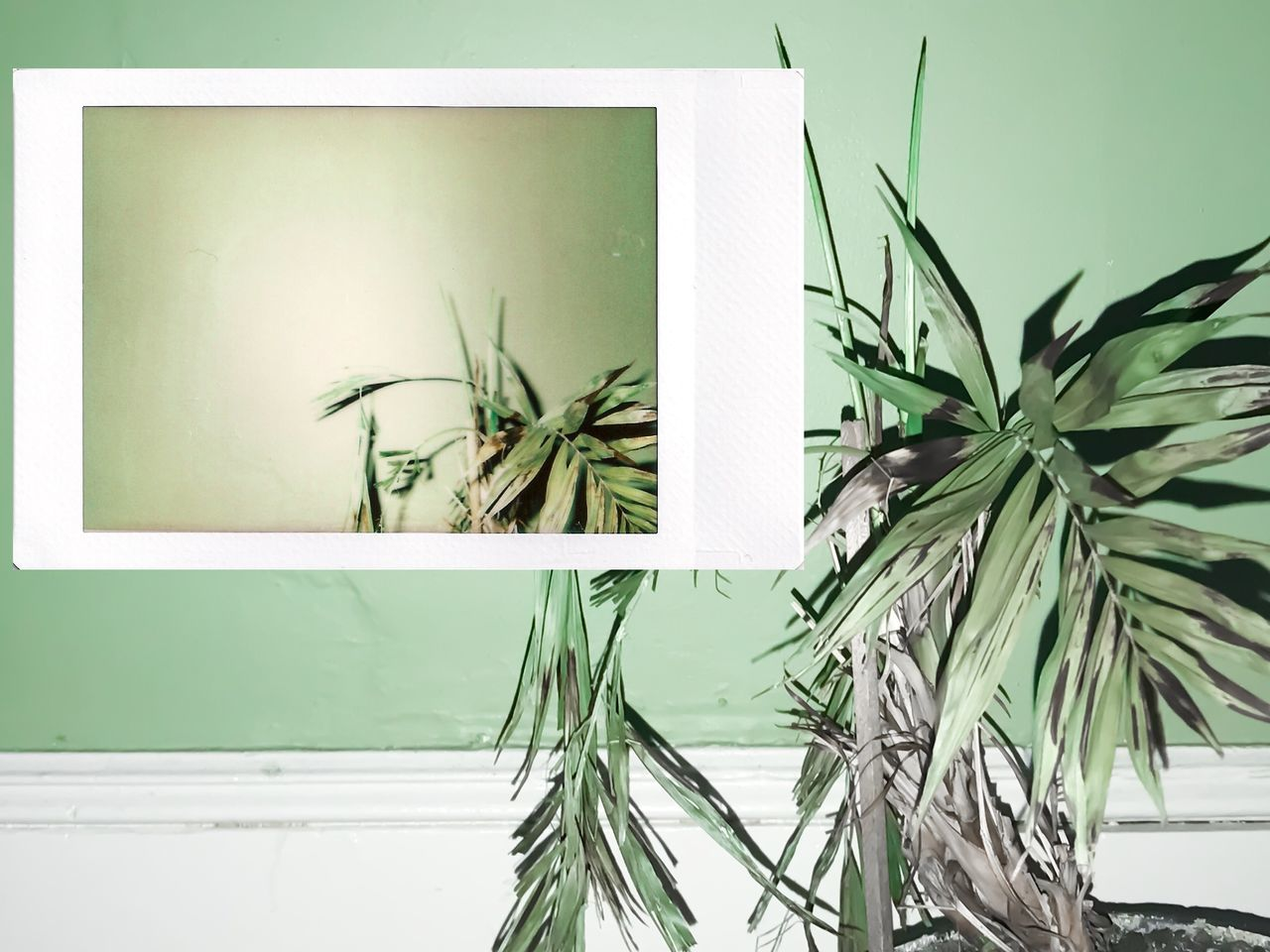 Close-up Day Green Color Growth Indoors  Instant Photo A Day Leaf Nature No People Plant