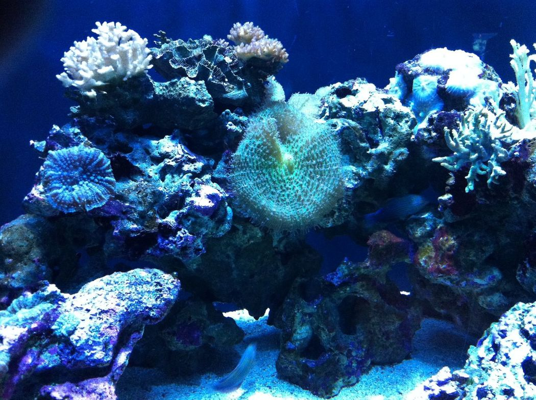 Animal Themes Aquarium Aquarium Life Aquarium Photography Beauty In Nature Coral Exploration Fish Freshness Nature Physical Geography Reef Rock Formation Sea Sea Life Seattle Aquarium Swimming UnderSea Underwater Water Wildlife Zoology