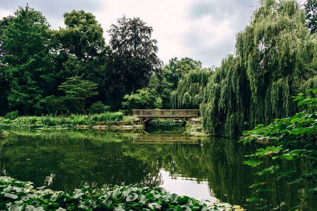 Stadtpark Steglitz Beauty In Nature Canal Cloud - Sky Day Green Green Color Growth Idyllic Lake Lush Foliage Nature No People Non-urban Scene Outdoors Plant Reflection Scenics Sky Standing Water Tranquil Scene Tranquility Tree Urban Landscape Urban Nature Water