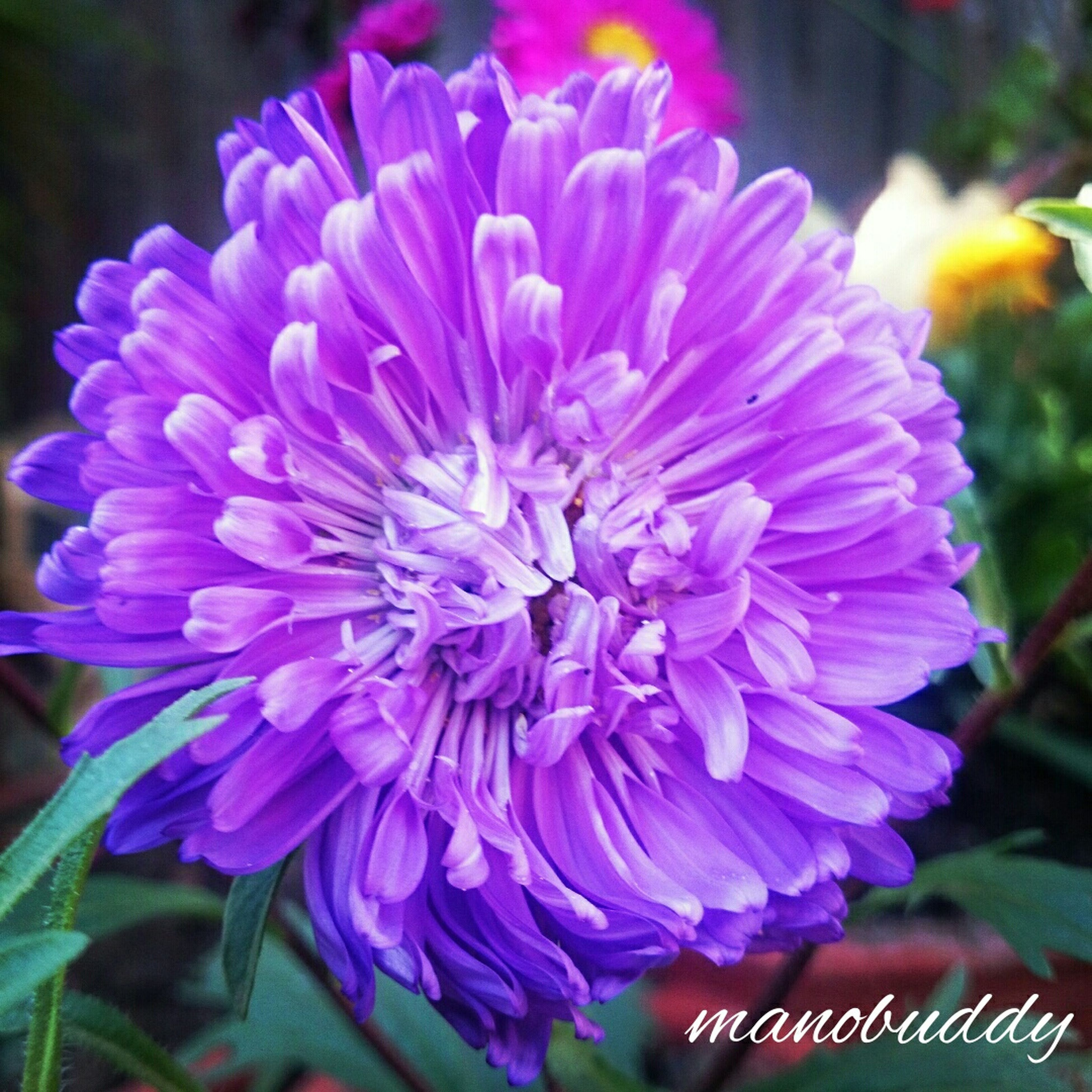 flower, petal, freshness, flower head, fragility, close-up, purple, beauty in nature, growth, focus on foreground, blooming, nature, plant, in bloom, single flower, no people, high angle view, day, outdoors, park - man made space