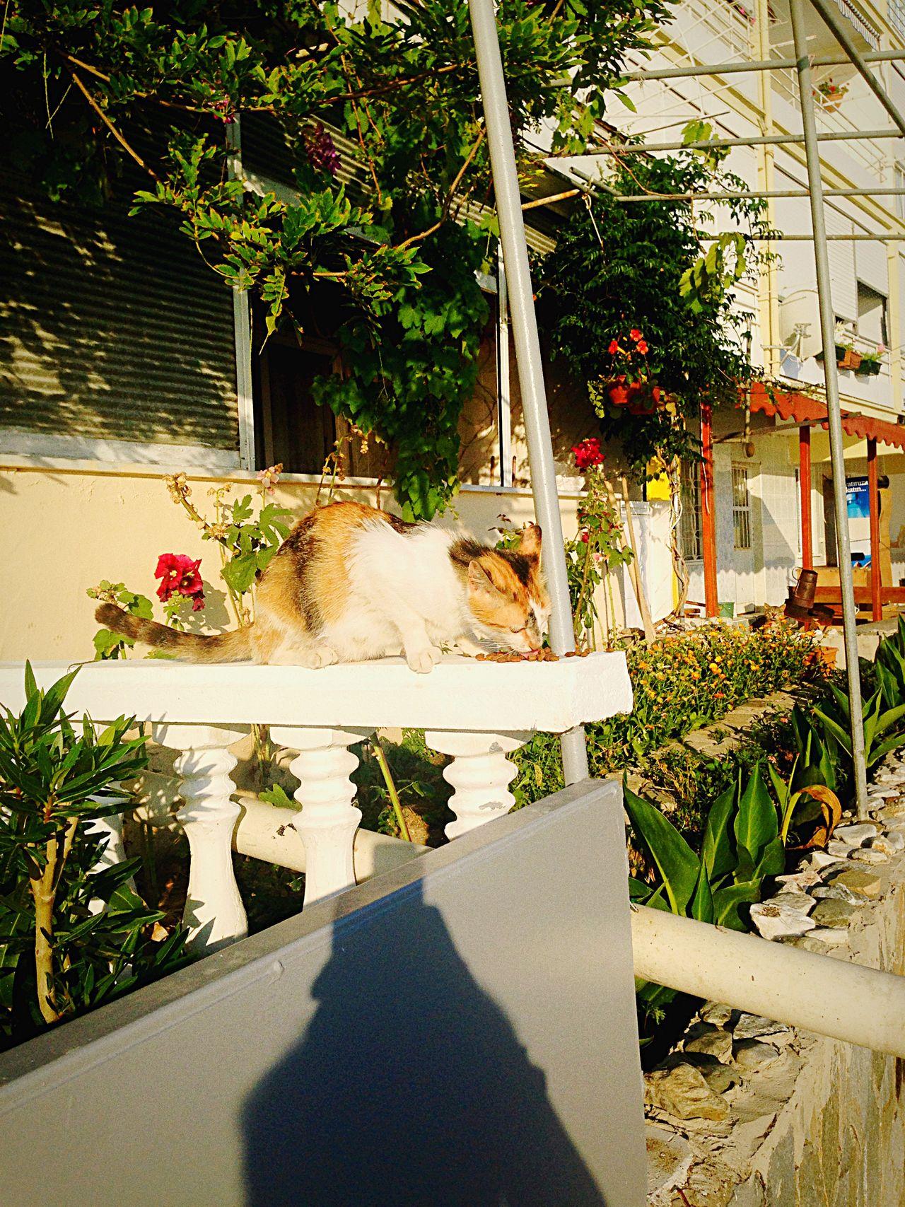 Enjoying The Sun Relaxing Enjoying Life Happy Sunday Cat♡