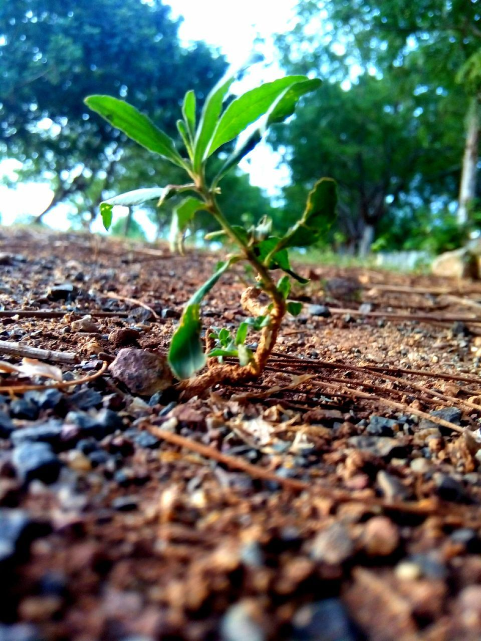 growth, plant, leaf, nature, green color, selective focus, green, no people, day, close-up, outdoors, fragility, beauty in nature, freshness