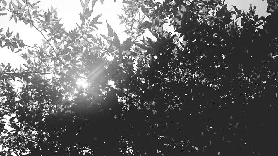 sous le solei