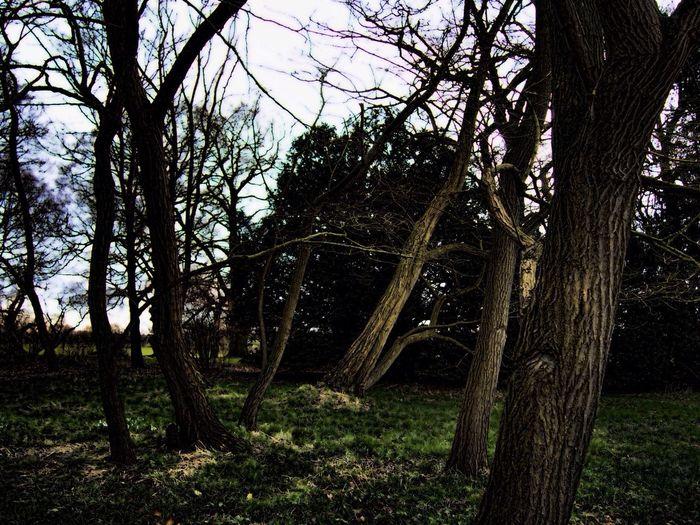 Beningbrough Trees Spooky